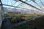 Pickmere Nurseries